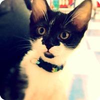 Adopt A Pet :: Selina - Green Bay, WI