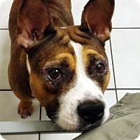 Adopt A Pet :: Piglet - Orlando, FL