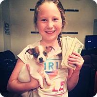 Adopt A Pet :: Fink - Sacramento, CA