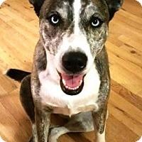 Adopt A Pet :: Tigger - Gilbert, AZ