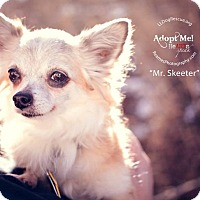 Adopt A Pet :: Mr. Skeeter - Shawnee Mission, KS