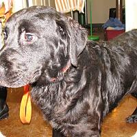 Adopt A Pet :: Beethoven - Charlemont, MA