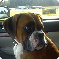 Adopt A Pet :: Winnie - Brentwood, TN