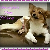 Adopt A Pet :: Penny - Harrisburg, PA