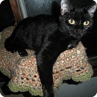 Adopt A Pet :: Beryl - Milwaukee, WI