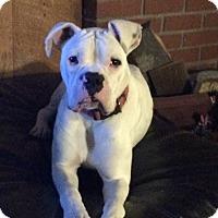 Adopt A Pet :: Gilligan - Reno, NV