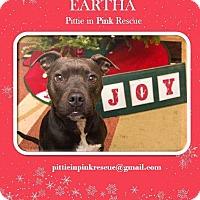 Adopt A Pet :: Eartha - nashville, TN