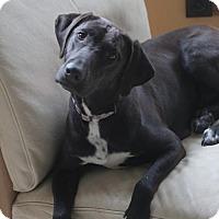 Adopt A Pet :: Mulan - Oakhurst, NJ