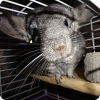 Adopt A Pet :: Houdini - Titusville, FL