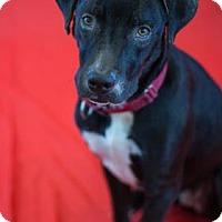 Adopt A Pet :: Valentine - Bradenton, FL