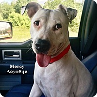 Adopt A Pet :: MERCY - Conroe, TX
