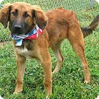 Adopt A Pet :: Finley - Oswego, IL