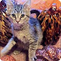 Adopt A Pet :: Boomer - Rocky Hill, CT