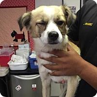 Adopt A Pet :: Morton - Fresno CA, CA