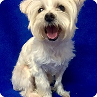 Adopt A Pet :: Heidi - Encino, CA