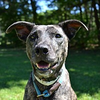 Adopt A Pet :: Litta - Brookhaven, NY