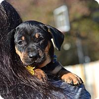 Adopt A Pet :: Neolithic - Stone Age Litter - Acworth, GA