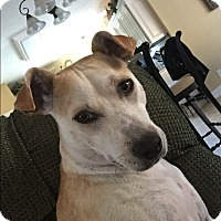Adopt A Pet :: Missy - Allen town, PA