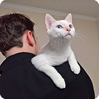 Adopt A Pet :: DALE - Raleigh, NC