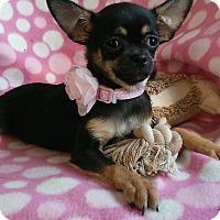 Adopt A Pet :: Mitzi - Thousand Oaks, CA