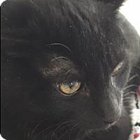 Adopt A Pet :: Nicole - Divide, CO