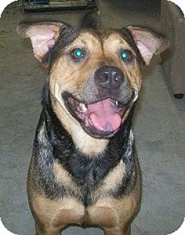 Catahoula Leopard Dog/Shar Pei Mix Dog for adoption in Williston, Florida - Sydney