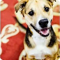 Adopt A Pet :: Hendrix - Lake Odessa, MI