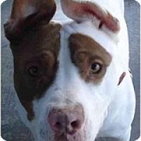 Adopt A Pet :: Fonzi - Fowler, CA