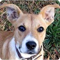 Adopt A Pet :: Sarah - Conyers, GA
