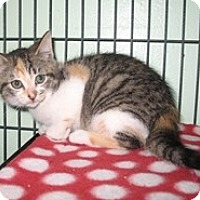 Adopt A Pet :: Ribbon - Shelton, WA