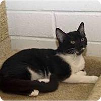 Adopt A Pet :: Theresa - New Port Richey, FL