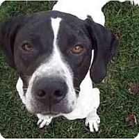 Adopt A Pet :: Zachary-ADOPTION PENDING! - Columbus, OH