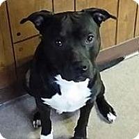 Adopt A Pet :: Benny - Bristol, TN