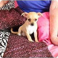 Adopt A Pet :: Eleena - Glastonbury, CT