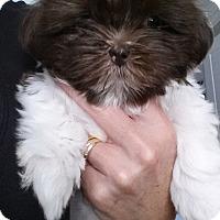 Adopt A Pet :: E Claire - Fort Lauderdale, FL