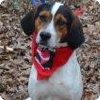 Adopt A Pet :: Gus - Hatifeld, PA