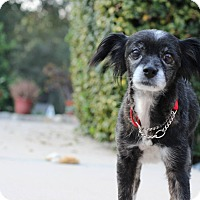 Adopt A Pet :: Molly - Burbank, CA