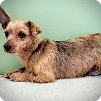 Adopt A Pet :: Marta - Newark, DE