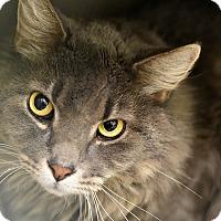 Adopt A Pet :: BIGGIE - Philadelphia, PA