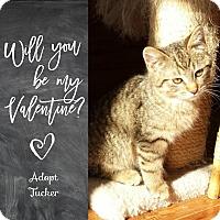 Adopt A Pet :: *Tucker* - Manitowoc, WI