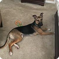 Adopt A Pet :: Kenobi - Colorado Springs, CO