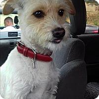 Adopt A Pet :: Pily - San Diego, CA