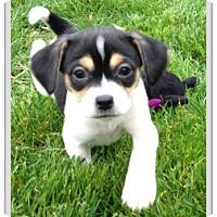 Adopt A Pet :: Carrie - Mechanicsburg, PA