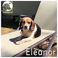 Adopt A Pet :: Eleanor - Pittsburgh, PA