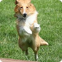 Adopt A Pet :: Minnie - Mission, KS
