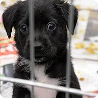 Adopt A Pet :: Sally - Weeki Wachee, FL