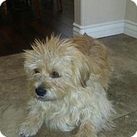 Adopt A Pet :: Hoagie - Las Vegas, NV