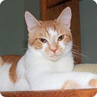 Adopt A Pet :: Charmander (with Eevee) - Fairfax, VA