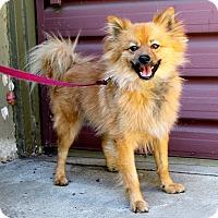 Adopt A Pet :: Buddy - Los Angeles, CA