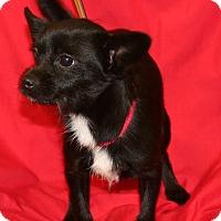 Adopt A Pet :: Lozo - Umatilla, FL